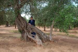 Francesco Caricato, direttore Casa dell'olivo, a